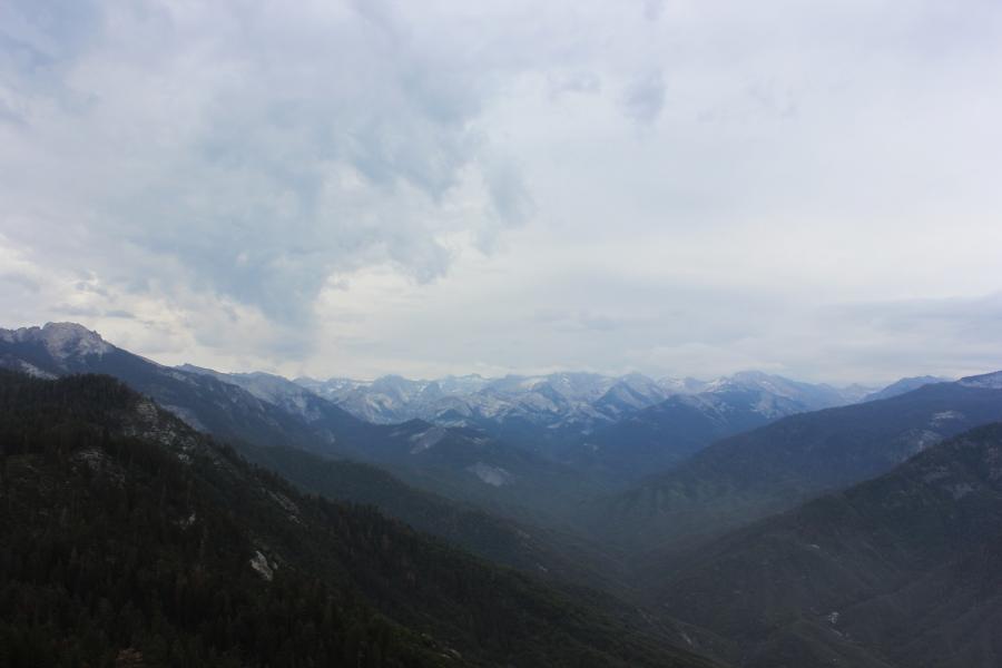 SequoiaIMG_8227