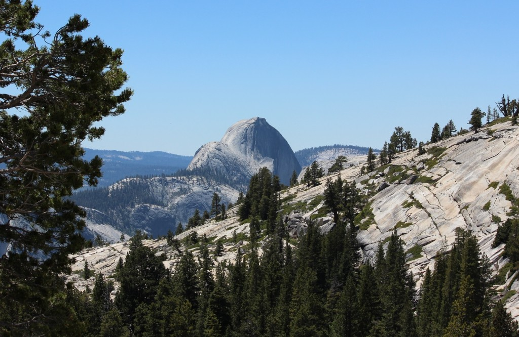 Half Dome Olmsted Point Yosemite