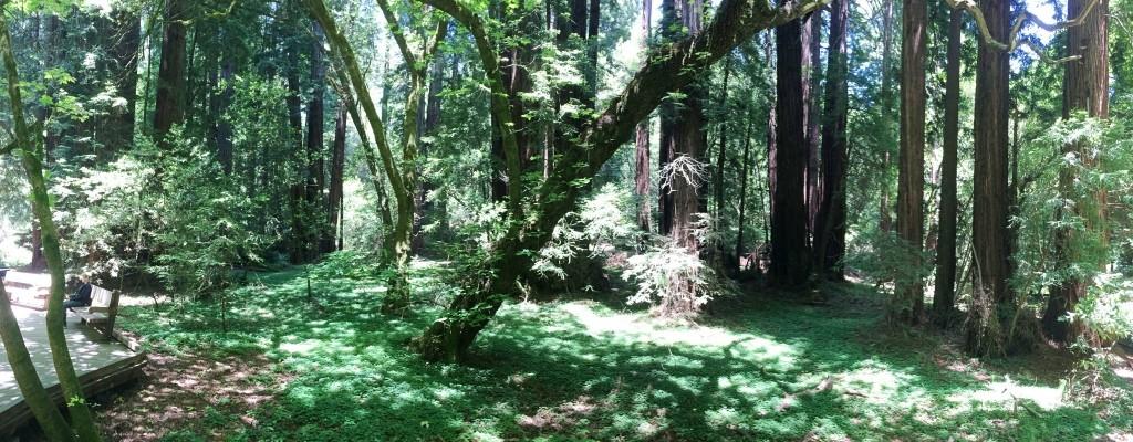 Muir WoodsIMG_3651